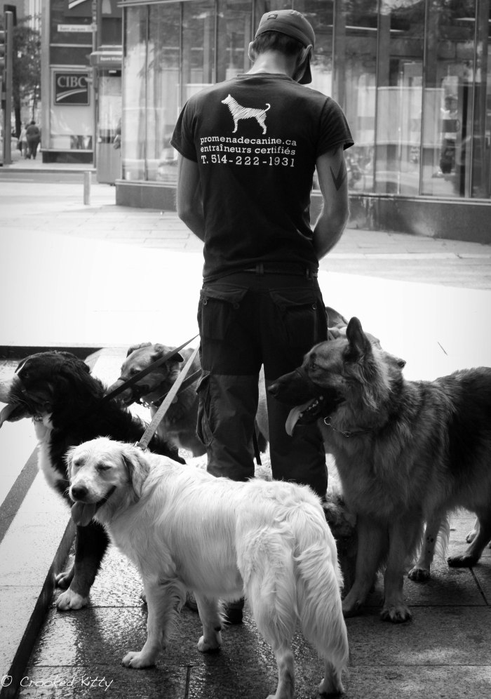 Dog Walker in Montreal